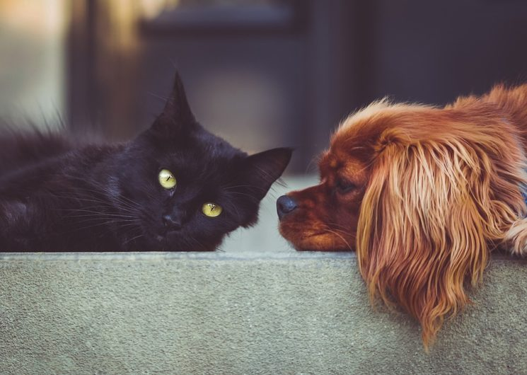 Choosing between cat or dog.