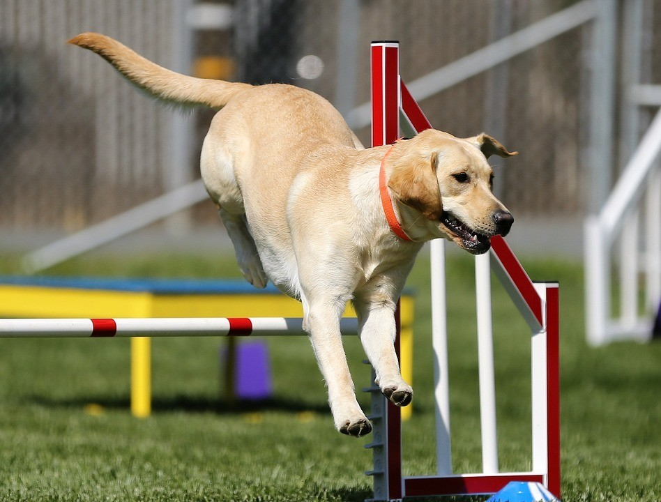 Materials and space are important in dog agility training.