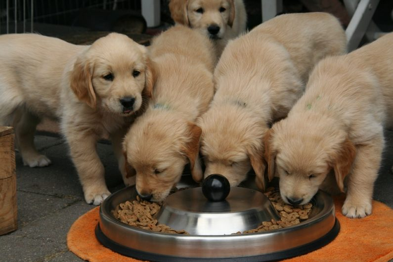Feed your dog with clean and safe food.